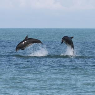 Dolphin Boat Trips