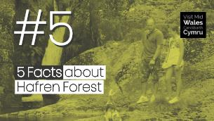 5 Facts about Hafren Forest